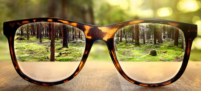 Spectacles forest. Shutterstock