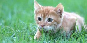 cat-animal-mackerel-red-baby-cat by birgl courtesy of Pixabay