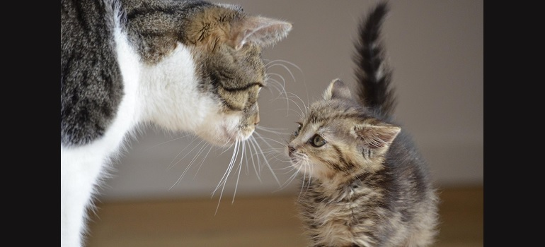 friends-big-and-small-cats courtesy of Pixabay