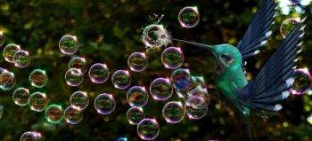 soap-bubbles-bird-burst-fantasy courtesy of Pixabay
