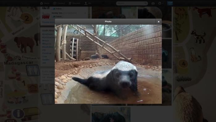 tweeting honey badger