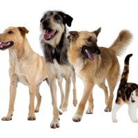 Hills Pet Nutrition - Digby and the gang