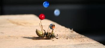 bee-wasp-superstar-balance-artists courtesy of Pixabay