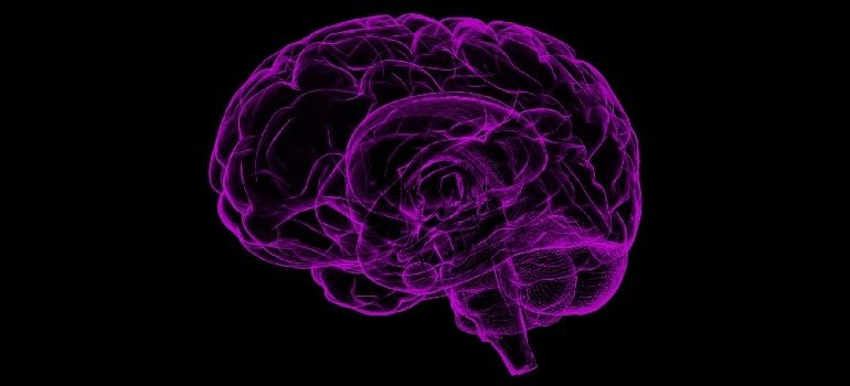 brain-human-anatomy-anatomy-human by Raman Oza courtesy of Pixabay