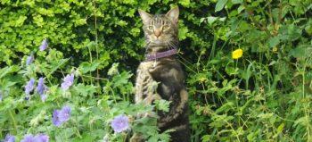 cat-animal-kitten-curiosity-pet courtesy of Pixabay