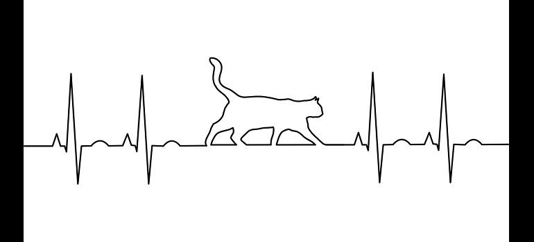 kg-electrocardiogram-anatomy-aorta-cat by Gordon Johnson courtesy of Pixabay
