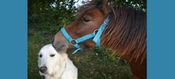 kiss-shetland-pony-dog by JacLou DL courtesy of Pixabay