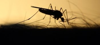 mosquito-feeding-silhouette-skeeter courtesy of Pixabay