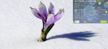 nature-blossom-snow-cold-winter-plant-courtesy of pxhere with NICD covid-19 stats 20 April 2020