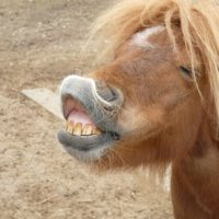 pony-horse-making-a-face-funny by Hans Braxmeier courtesy of Pixabay