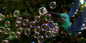 soap-bubbles-bird-burst-fantasy courtesy of Pixabay